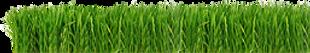 Grass Strip