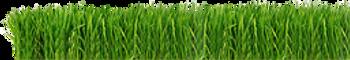 herbe Strip