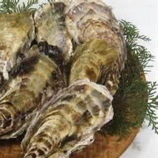 殻付き牡蠣(真かきくん)/並1箱10個入り