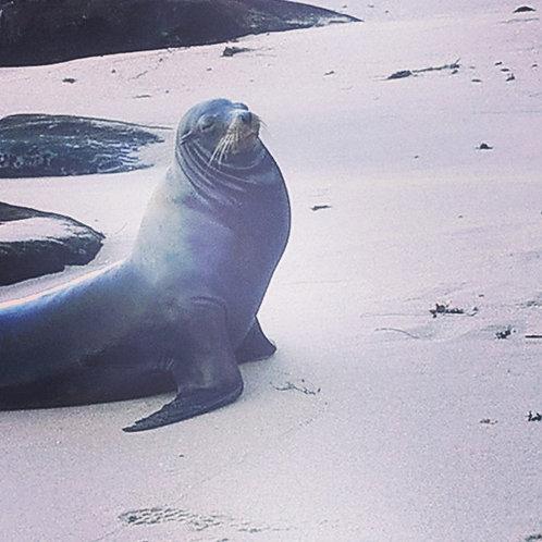 "Sea Lion Love - ""Strikes a Pose"""