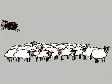 Ovelhas negras voam