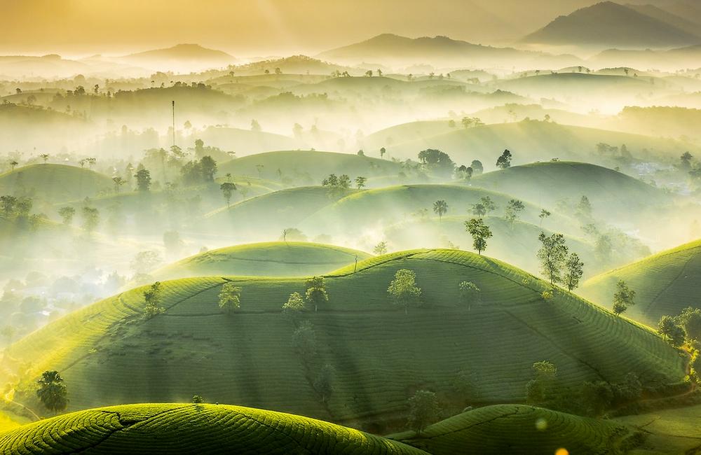 """""""Tea Hills"""" von Vu Trung Huan"""
