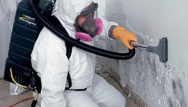 mold-vacuum.jpeg