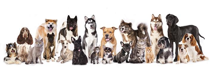 Tierernährungsberaterin für Hunde und Katzen