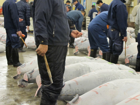 Bluefin Tuna at Auction
