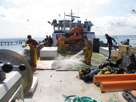 Cleaning Up at a Bluefin Tuna Farm