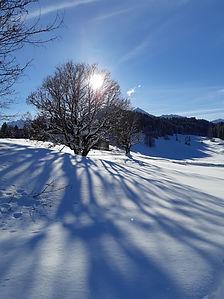 Winter Baum Kleinwalsertal.jpg