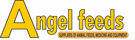 ANGEL FEEDS NEW LOGO.png