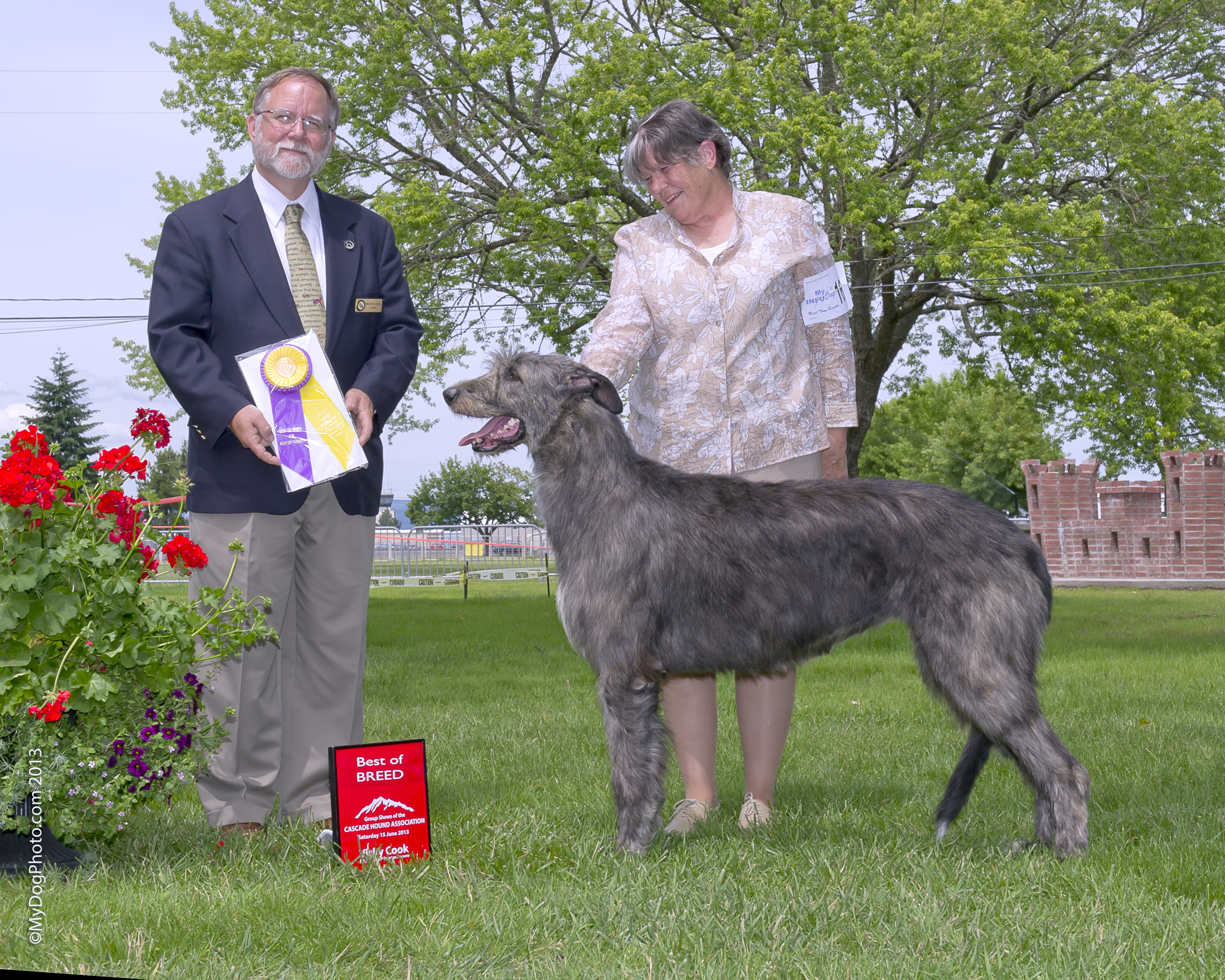 Best of Breed Irish Wolfhound