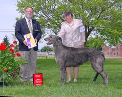 Best of Breed Irish Wolfhound