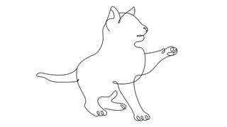 Contour Kitten