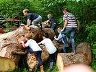 Parties, Children's Parties, Maidstone, woodland