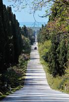 viale di Bolgheri.jpg