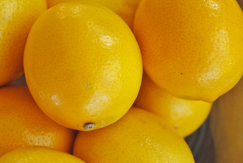 Lemon Tree Meyer MARCOT GROWN (quick to fruit like a grafted tree)