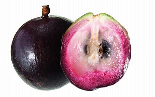 Star Apple Tree MARCOT GROWN (quick to fruit like a grafted tree)