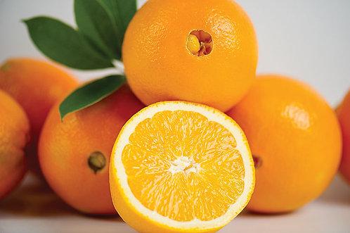 Orange Tree Navel Washington (Already Fruiting)