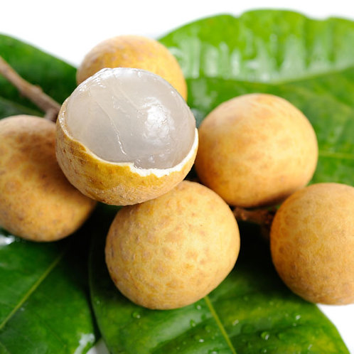Longan Tree (1 YEAR OLD)