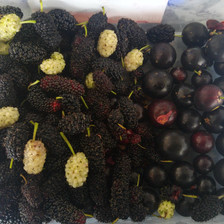 Black and White Mulberries and Black Grumichamas