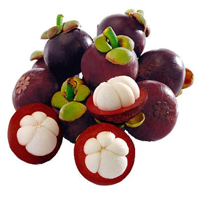 Purple Mangosteen Tree(2 YEARS OLD)