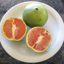 Cara Cara Navel Blood Orange