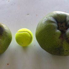 Black Sapote Fruit