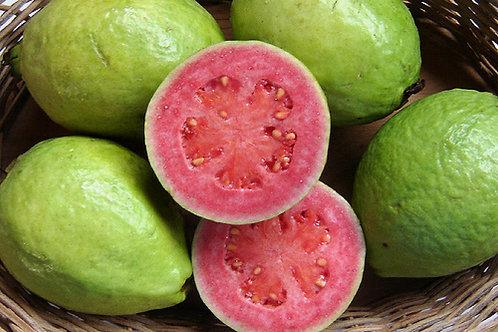 Guava Tree (Pink Hawaiian)