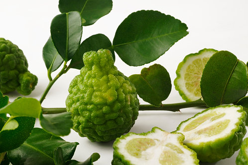 Kaffir Lime Tree MARCOT GROWN (quick to fruit like a grafted tree)