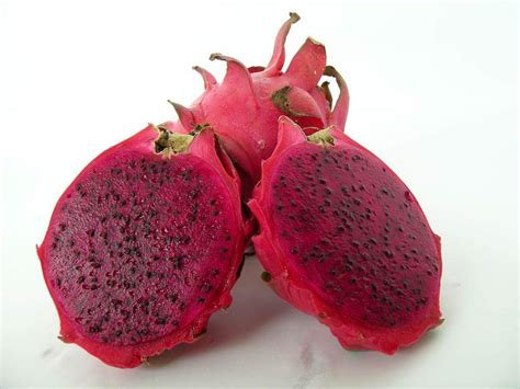 Dragon Fruit CUTTING GROWN (will fruit within 1 year)