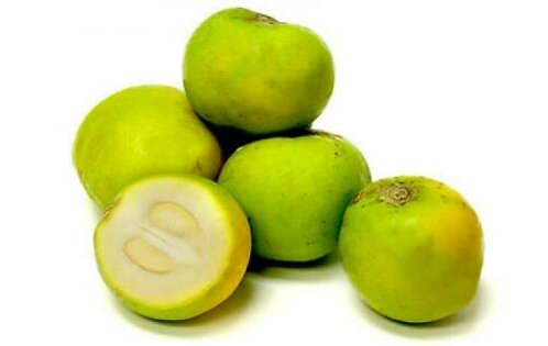 White Sapote (2 years old)