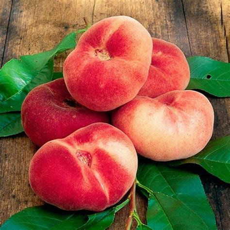 Peach china flat fruit tree MARCOT GROWN (quick to fruit like a grafted tree)