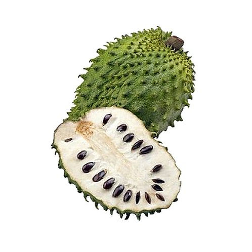 Soursop Tree 2 years old