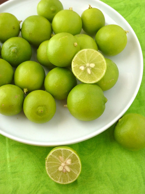 Key Lime Tree MARCOT GROWN (quick to fruit like a grafted tree)