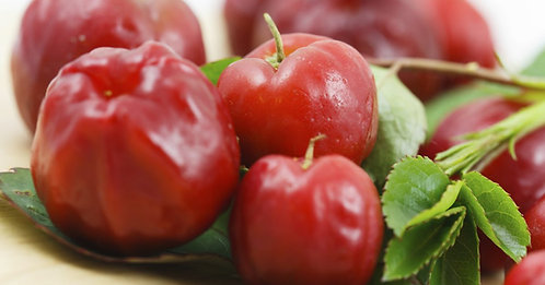 Acerola Cherry Tree MARCOT GROWN (quick to fruit like a grafted tree)