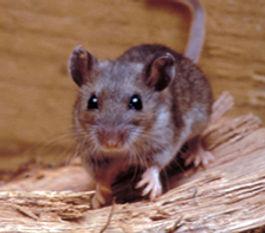 Mouse Control Albuquerque