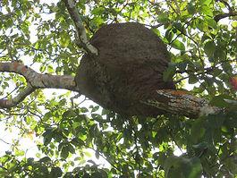Termite Control Albuquerque