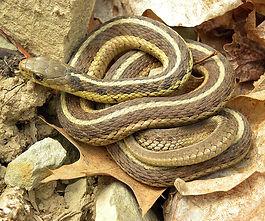 Snake Removal Albuquerque