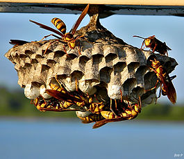 Wasp Control Albuquerque