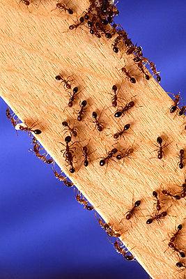 Ant Control Albuquerque