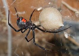 Spider Control Albuquerque