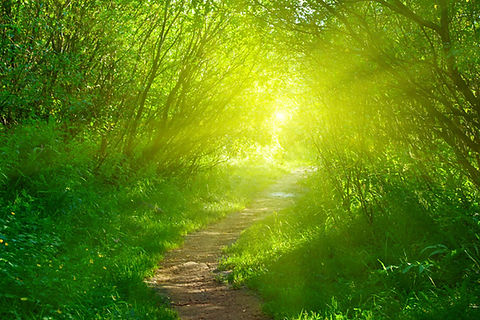 soul_path.jpg
