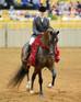2014 AHT Readers' Choice Half Arabian Hunter Horse of the Year - Maybelline CA!