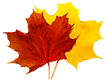 yellow-and-red-leaves.png