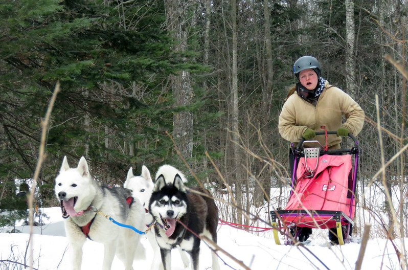 Hanna's 3 dog team