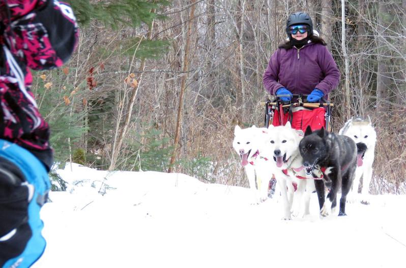 Donna's 4 dog team