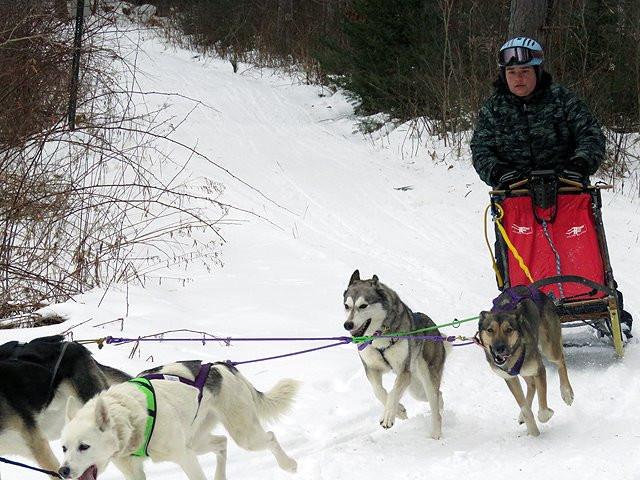 Jamie's 4 dog team