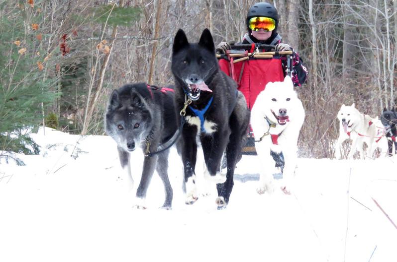 Mikalya M.'s 4 dog team