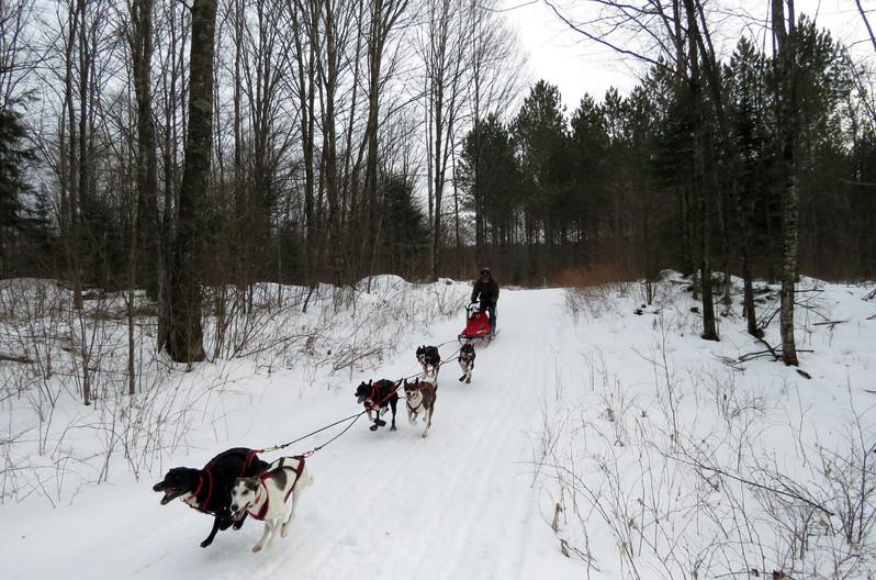 Ken's 6 dog team