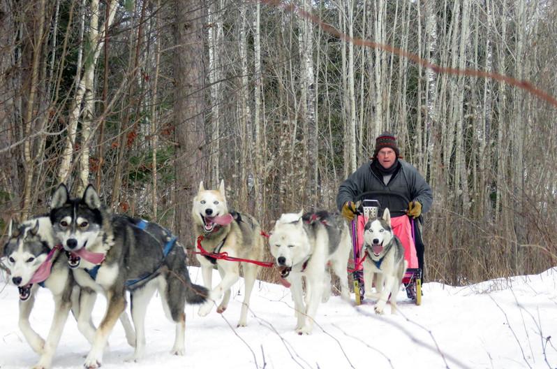 Jeff's 6 dog team