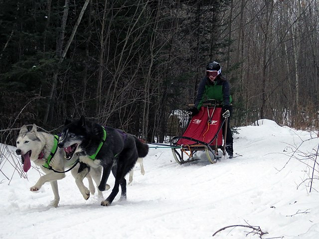 Michaela M. driving Riley's 3 dog team