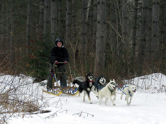 Laurie T.'s 4 dog team